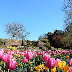 Cannizaro Park - Spring Bulbs