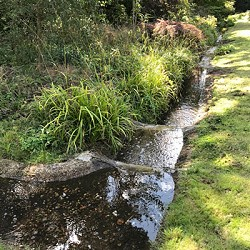 Cascade repaired by volunteers in Cannizaro Park